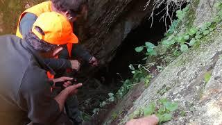 Battue aux sangliers 2018, sauvetage de deux chiennes dans une  crevasse