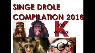 Singe Drole | Compilation des singes les plus droles 2016