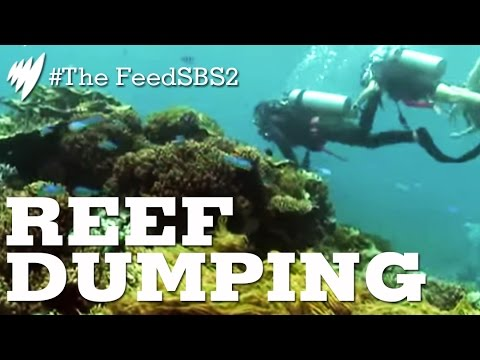 Reef Dumping Dredge Spoils I The Feed