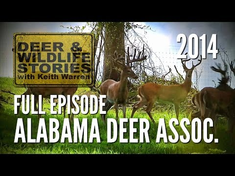 The Alabama Deer Association - Deer & Wildlife Stories