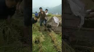 china farmer