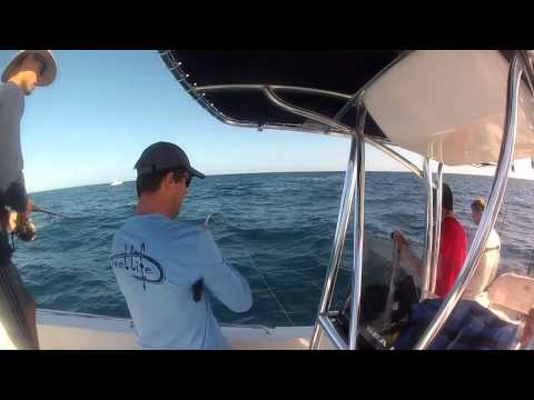 Sarasota, Florida SICK Amberjack Fishing