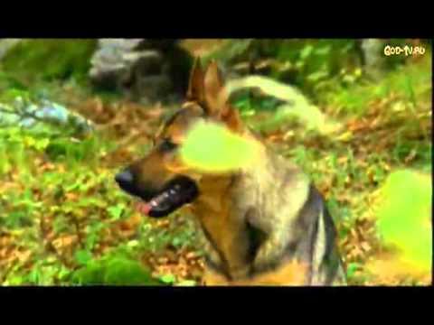 Девочка и волк / Mein Freund der Wolf (1999) фильм