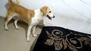FUNNY DOG VIDEOS || TRY NOT TO LAUGH || DOG PLAYING || DOG LOVER || DOG || TUFFY AND LILY - THE DOGS