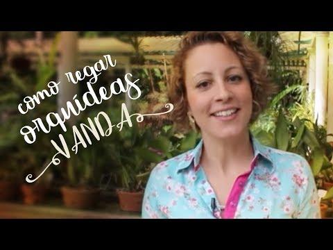 Como cuidar de orqu deas regando a vanda youtube - Como cuidar orquideas en maceta ...