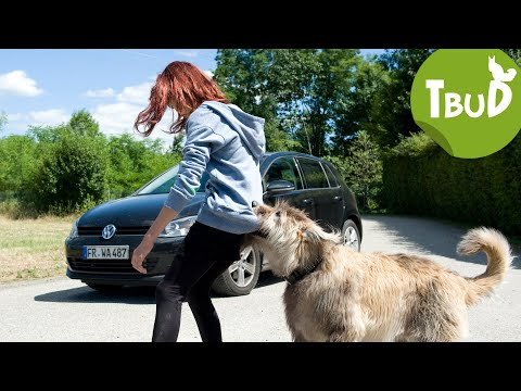 Böse Brezel (Folge 42)   Tiere Bis Unters Dach   SWR Kindernetz