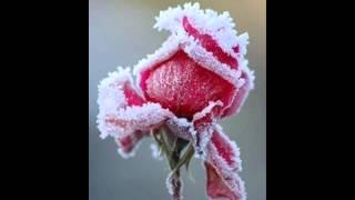 Watch Swan Lee Flowers In The Wintertime video