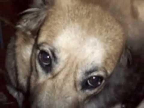 Il cane più dolce del mondo