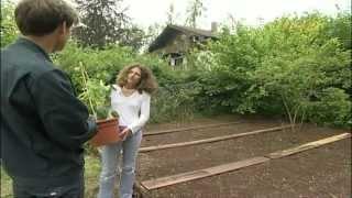 Gartentipps, Beet anlegen, ein Bauernbeet selbst gemacht