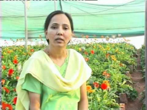हिन्दी Video of Farmer Knowledge Exchange - aAQUA by Agrocom, aaqua.org