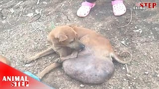 Dog with Massive Tumor Needs to Cut a Leg in Treatment