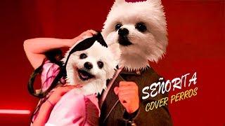 Shawn Mendes, Camila Cabello - Señorita  - Cover Perros