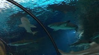 TRAPPED BY SHARKS | FaZe Rug