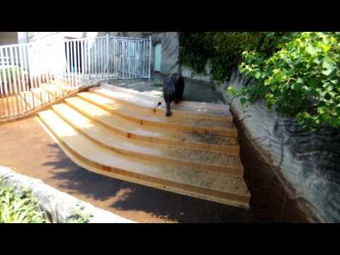 コビトカバのプールに水が無い@東山動物園