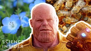 What If Thanos Really Had Eliminated 50% Of All Life, Like In 'Avengers: Infinity War'