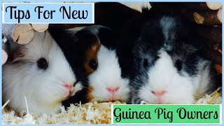 Top 9 Tips for New Guinea Pig Owners