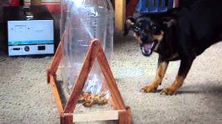 Morena resolviendo juego de rotar las botellas-Morena gets treats from bottles