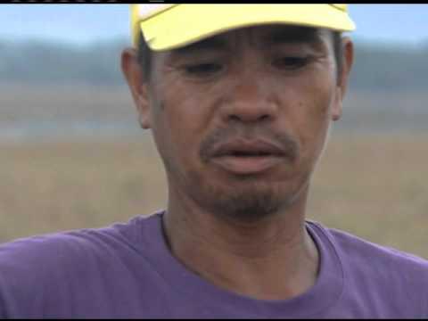 Farmers struggle after typhoon 'Lando'