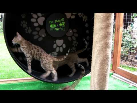Cat Wheel - Outdoor