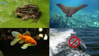 Dạy bé tập nói các con vật biển bằng tiếng anh