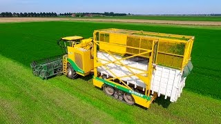 Parsley Harvesting | Ploeger MKC-2TR container mower | Peterselie maaien loonbedrijf Maverko