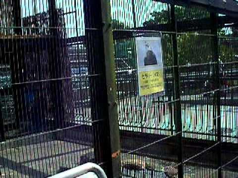 動物園で見たハクトウワシ