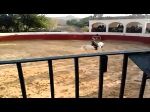 Thumbnail of video Exhibición Ecuestre en la Ganadería de Torrestrella (Cádiz)