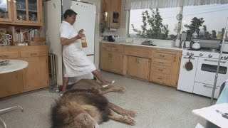Unbelievable: living with lions and tigers at home as a best friends
