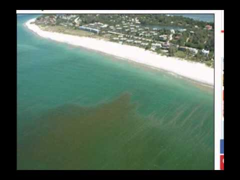 Toxic Red Tide Threatens Florida Beaches, Marine Life and Could Devastate Economy.