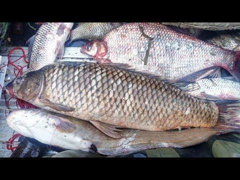 Рыбалка Сетями, Утро снимаем сеть, Рыбалка по большой воде