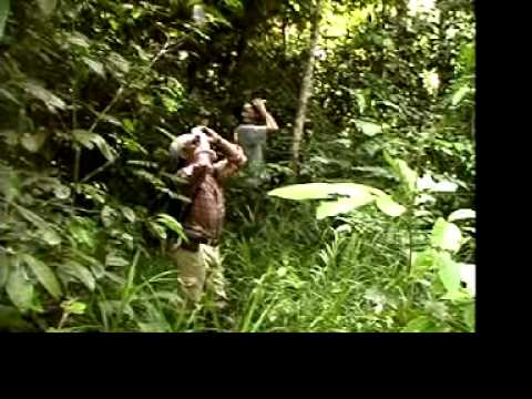Corporate Video (WWF MALAYSIA)