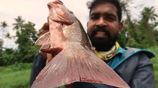 കോരിച്ചൊരിയുന്ന മഴയിൽ ചെമ്പല്ലി പിടുത്തം ചെമ്പല്ലി ഫ്രൈയ്യും / Rain Fishing   Kerala Fishing