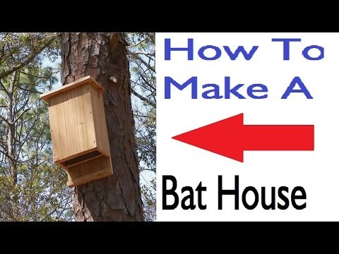 Build a bat house step by step for How to frame a house step by step