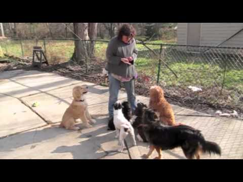Patience In Dog Training: Six Dogs Sit And Then Lie Down video