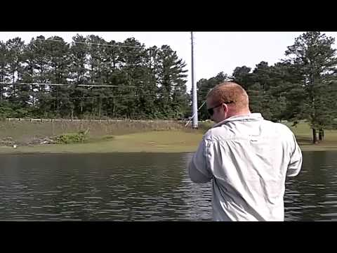 Lake Allatoona Hybrid Bass Fishing