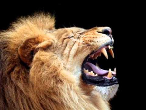 Lion Roar 2 - Sound Effect video