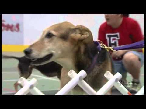 What is Flyball?