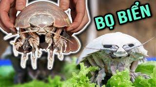 🔥TXT - LOÀI BỌ KHỔNG LỒ SỐNG DƯỚI ĐÁY BIỂN 2000M | CÁCH LÀM THỊT VÀ HẤP BỌ BIỂN | Giant Isopod