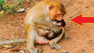 Ah! Why Mom Angry Her Cute Baby Monkey Like This, What's Happen On Baby!