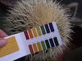 The Correct Ph Of Water For Your Cacti Succulent Plants How To Test mp3