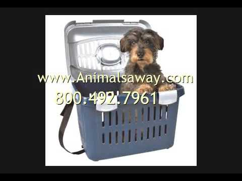 Need Pet Transport To Brunei  Call Animals Away