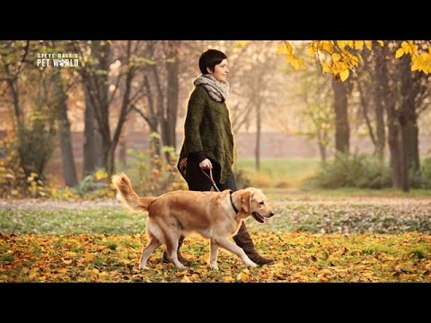 Thumbnail image for 'Dogs Love the Fall'