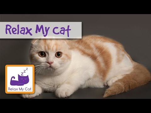 Music For Cats To Play Relaxing music for cats soothing calming songs FIREWORKS talking Cats playing