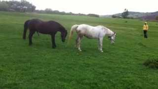 Horse Sex!