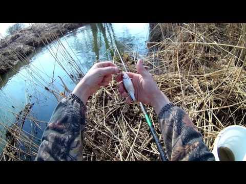ловля воблы в мае видео