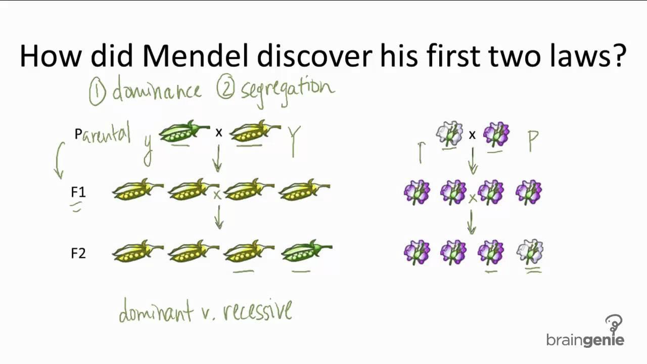 Gregor Mendel - ScienceDaily