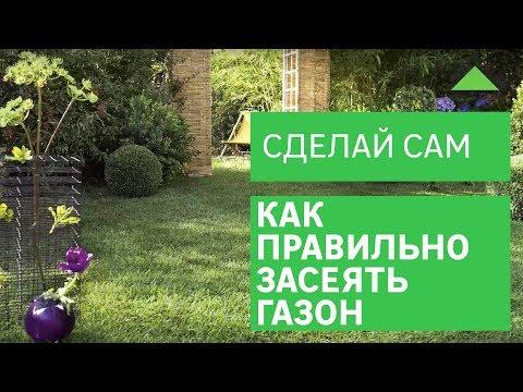 Как засеять газон на даче своими руками 360