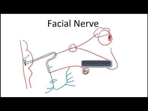 Facial Nerve Lesions thumbnail