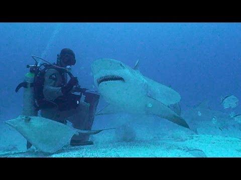 Marine Life Conservation & Eco-Tourism