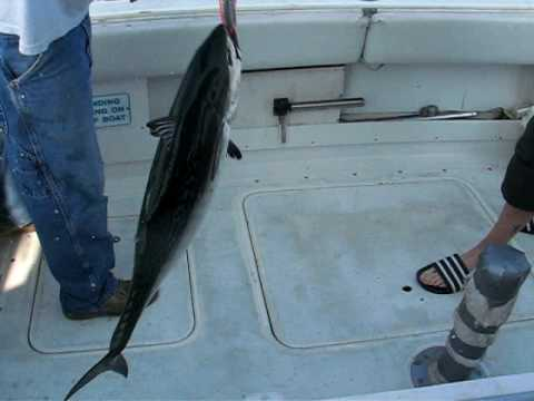 Deep Sea Fishing - Bonita Tuna - Carolina Beach